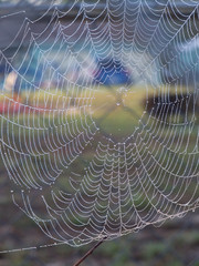 Spider web lined with dew in the early morning