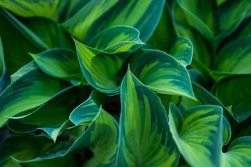 Ostre zielone li艣cie