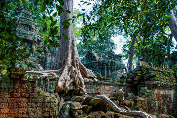 Tree growing out of the temple wall in Angkor Wat Wall mural