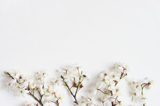 Spring banner. White prunus flowers, cherry blossoms isolated on white wooden background. Flat lay feminine styled composition, top view. Floral pattern. Easter concept.