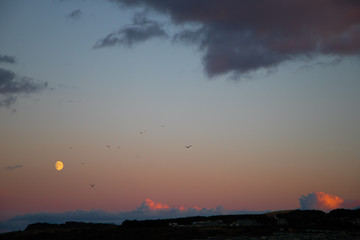 Birds Flying by Moon during Sunset