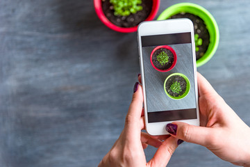 Women's hands taking pictures of seedlings in pots on a smartphone