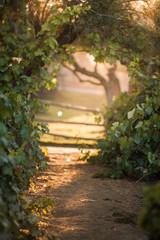 Light in the Vineyard