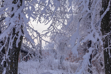 snow-covered trees shot in Cheboksary in Russia on December day 2018