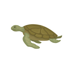 Turtle reptile animal side view vector Illustration on a white background