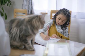 女の子を見ている猫