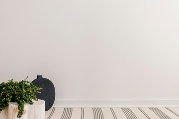 White empty wall, black vase and green plant on wooden table in spacious interior, real photo with copy space
