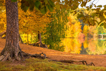 The shore of a lake in an autumn park, the colored foliage of trees on a sunny day