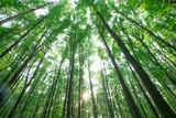 Die grüne Schönheit der Realität