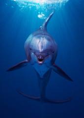 dolphin in aquarium