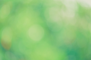 Sunlight green bio background, abstract blurred foliage sun light. Organic design nature abstract background with copyspace for text advertising design. Blur nature image in sunshine  and bokeh effect
