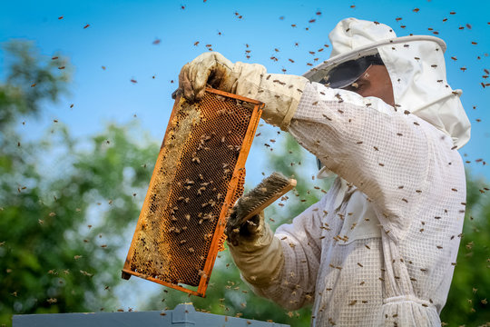 Beekeeper Controlling Colony And Bees
