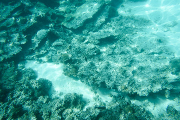 Underwater coral reef formation on sandy sea bottom