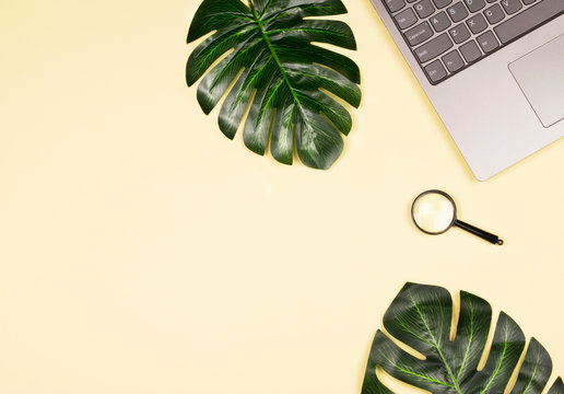 Monstera leaves, laptop and magnifying glass.