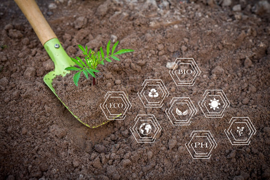 Garden tools shovel and rake on the ground with a plant sprout, flat lay top view with copy space, concept of horticulture ecology hobby