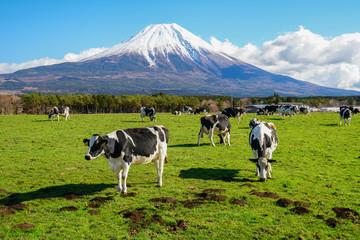 静岡県 富士山 牛 朝霧高原