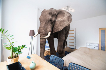 Elephant in the room Wall mural