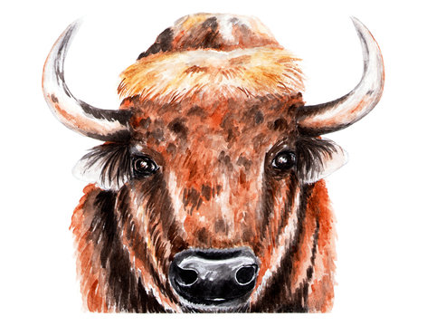 Portrait of bison. Watercolor illustration. The bison looks at the camera. Forest animal.