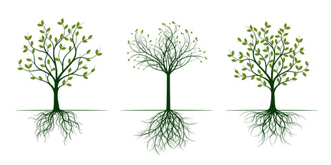 Green Spring Trees with Leaves. Vector Illustration.