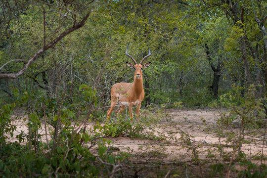 Khudu Wildlife Estate Hoedspruit