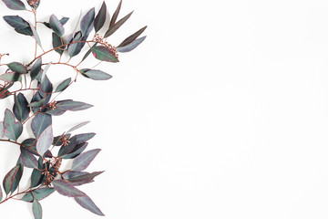 Eucalyptus leaves on white background. Flat lay, top view, copy space