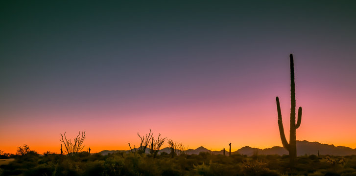 Arizona deserts are home to many different types of cacti. Silhouettes that show the different shapes of these Southwest USA beauties are pictured against setting sun backdrop in these nature photos