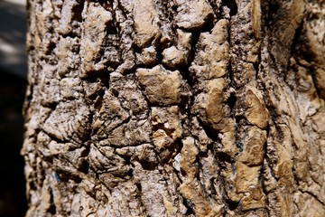 Close-up tree bark texture as a wooden background