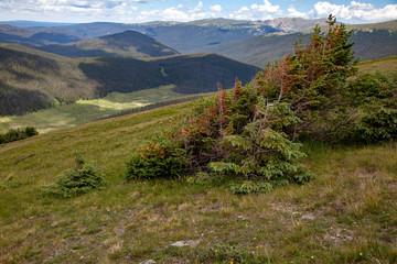 Alpine Vista, Rocky Mountain National Park