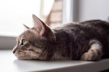 Cute cat lying on the windowsill and sadly looking out the window. Close-up.