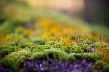 Beautiful Green Moss Grown Up Cover the Rough Stones in the Forrest