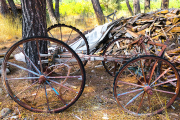 Antique old cart in the forest
