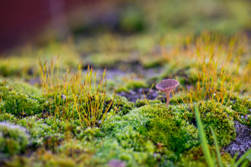 Beautiful Green Moss Grown Up with Mushroom Cover the Rough Stones in the Forrest
