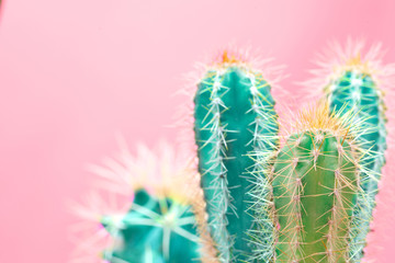 Trendy tropical Neon Cactus plant on Pink Color background. Minimal Art Concept. Creative Style.
