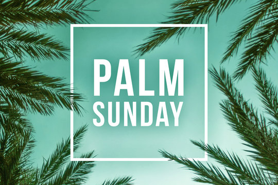 Palm Sunday Holiday Text Illustration with Palm Branches and White Square