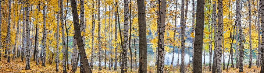 Birch grove against the lake on sunny autumn day, landscape, panorama, banner Fototapete