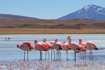 Flamingos in den Bolivianischen Anden