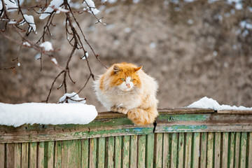 Orange cat sitting on a wooden fence