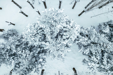 aerial drone view of pine and leaf forest covered with snow in cool winter day b