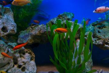 Marine Aquarium, Blurred Abstract Background