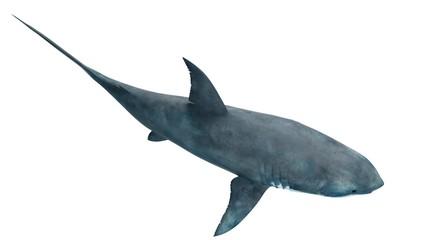 Illustration of a great white shark