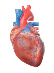 Illustration of a heart with a bypass