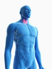 Illustration of a man's thyroid gland