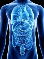 Illustration of a man's internal organs