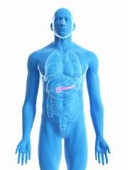 Illustration of a man's pancreas
