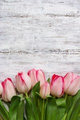 Pink Tulips on rustic white background with copy space