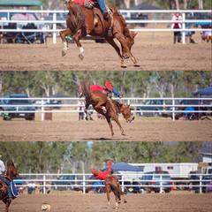 Cowboy Riding Bucking Bronco Collage