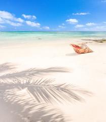 ombre de cocotier et coquillage sur plage de l'île Maurice