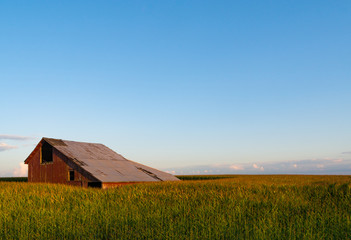 Old wooden barn in the rural cornfield.  LaSalle County, Illinois, USA