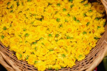 yellow chrysanthemums flowers in the basket of farmer