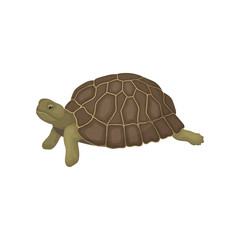 Turtle, tortoise reptile animal with relief shell, side view vector Illustration on a white background
